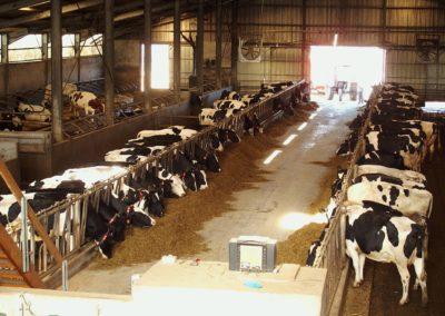 Ferme bovine à Jalavoux Haute Loire (43)